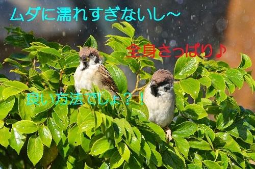 150_201710072111185f8.jpg