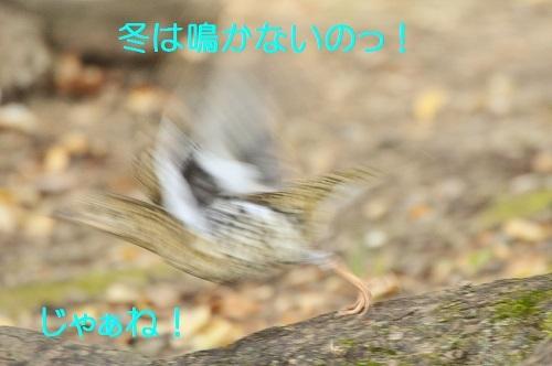 170_20171220181448b4a.jpg