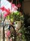 サンルームの花