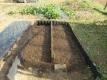 苗床に植え替えたタマネギ