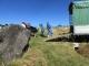 トラックに積み込まれる牛