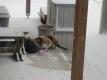 寒そうな猫たち