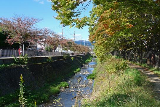 岩倉川の桜並木