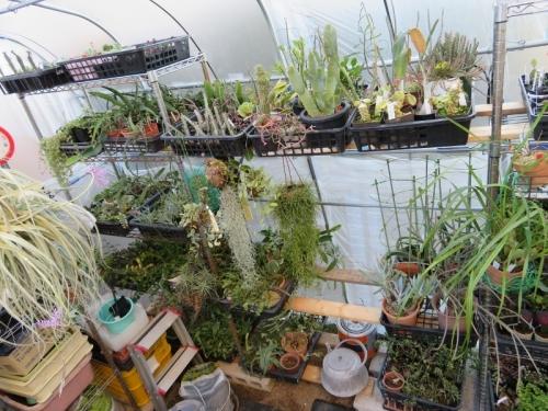 温室に取り込んだ観葉植物いろいろ~♪石油温風ヒーターで夜間保温12℃保ちたいです。2017.11.21