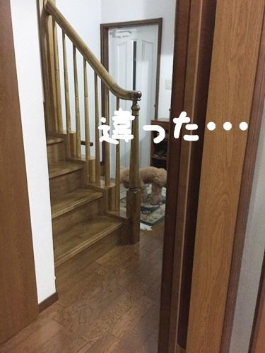 IMG_7043-1.jpg
