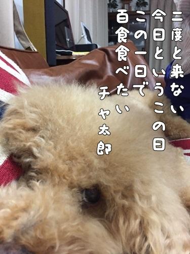 IMG_7133-1.jpg