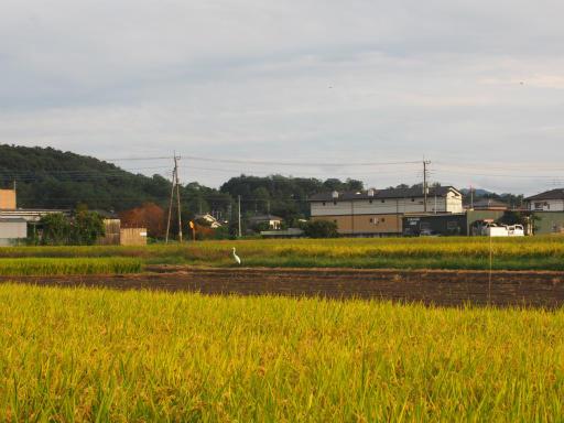 20170923・藤岡5-13