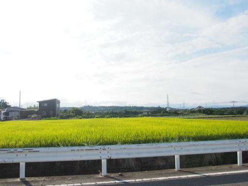 20170923・藤岡空07・水田と鉄塔