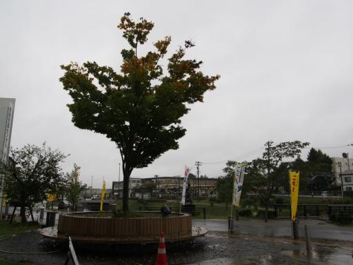 20171022・台風東北旅行空拡大01・二本松紅葉し始めの木