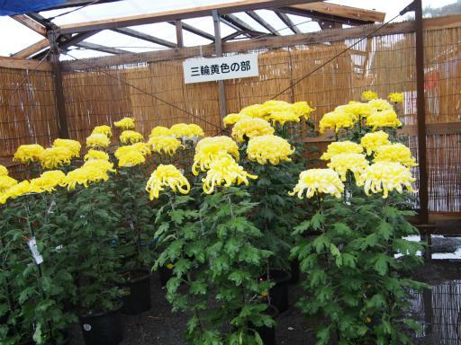 20171022・まつり二本松菊人形05・三輪黄色