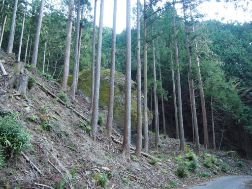 20171111・名栗散歩2-18・ゴリラみたいな岩・中
