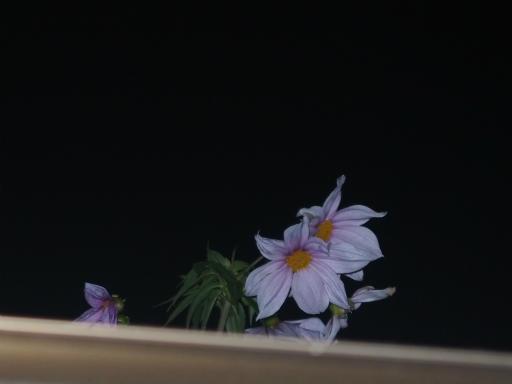 20171129・宵の口の小手指散歩1-16