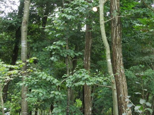 森の響き0001