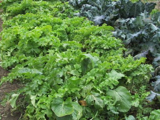 野菜0001