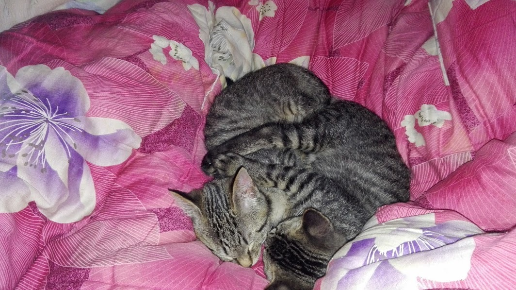 きなこあんこ布団で寝る