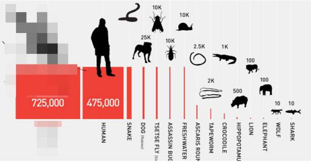 80 人間を殺す動物 イラスト