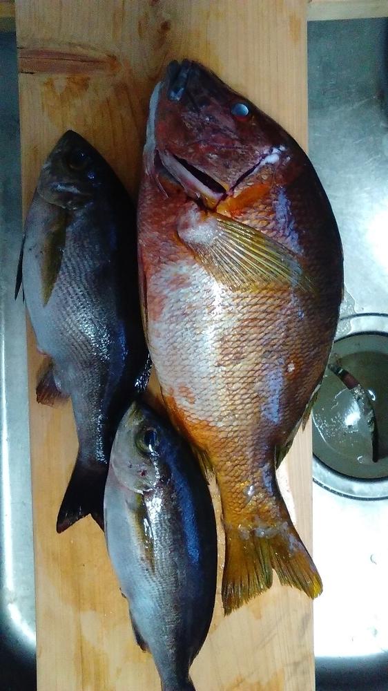 【釣果情報】ライトカゴ(夜釣り)