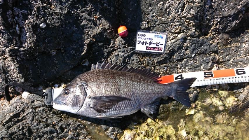 【釣果情報】チヌフカセフォトダービー