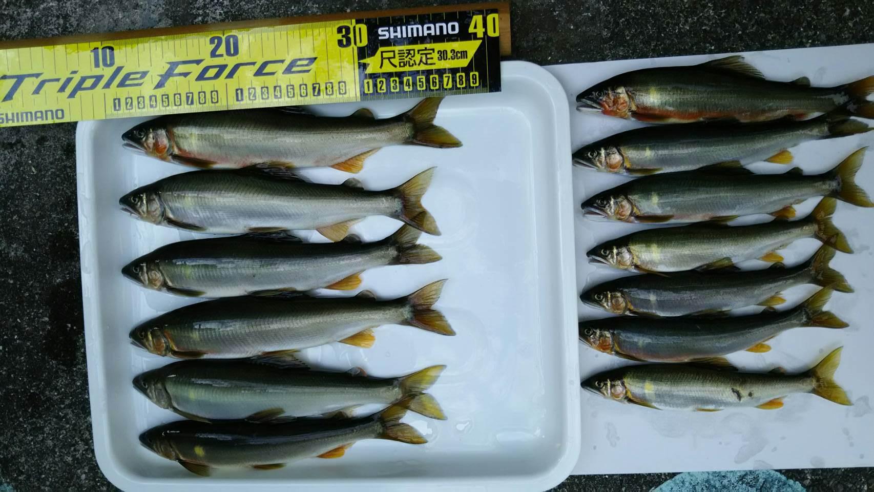 【釣果情報】鮎 友釣り いつもの3人で釣行