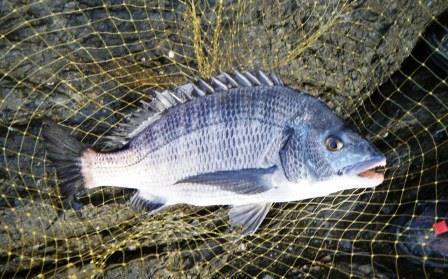 【釣果情報】1年ぶりの池の浦