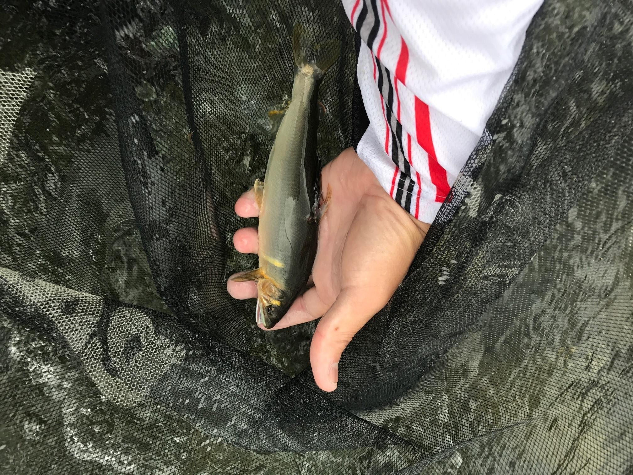 【釣果情報】仁淀川