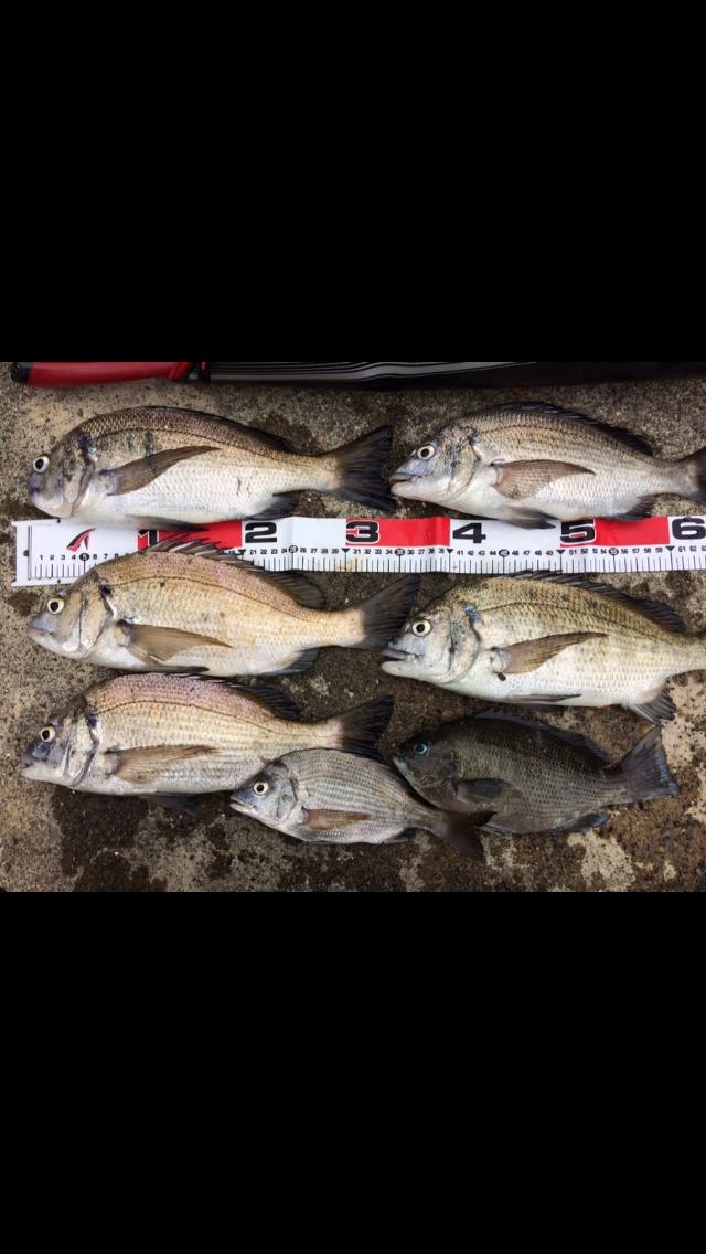 【釣果情報】アベレージ35センチ チヌ