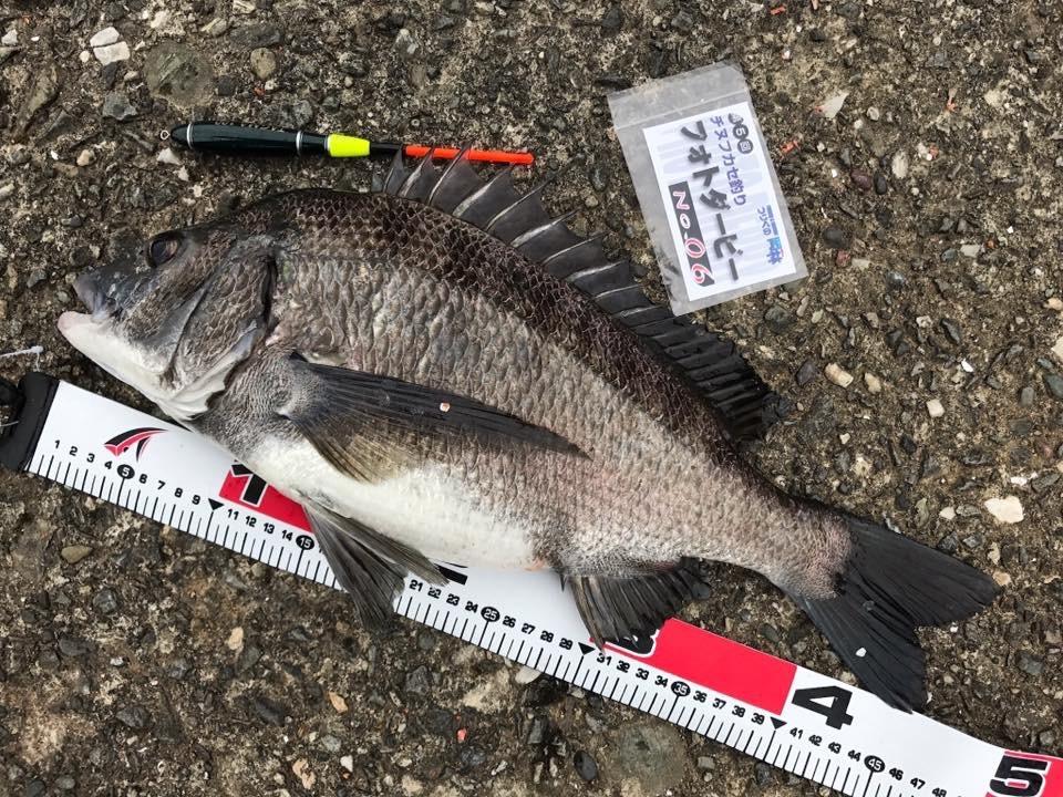 【釣果情報】チヌフカセ釣りフォトダービー