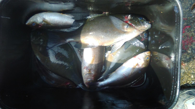 【釣果情報】室戸でフカセ釣り