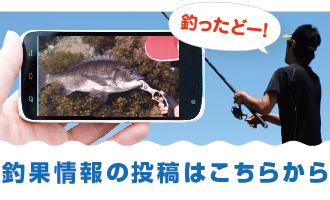 釣果情報入力フォーム