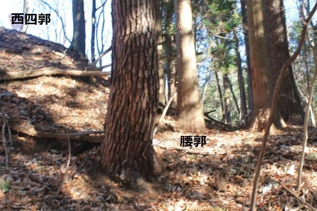 IMG_7422.jpg