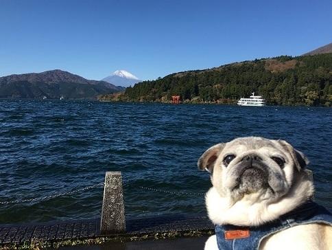 芦ノ湖とチッチ20171111