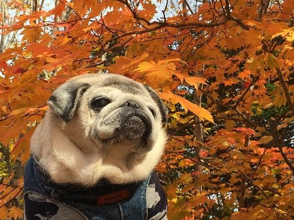 大沼公園の紅葉とチッチその1