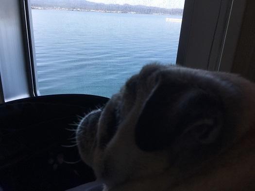海を見るチッチさん20171028