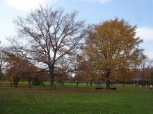 芝生広場の木