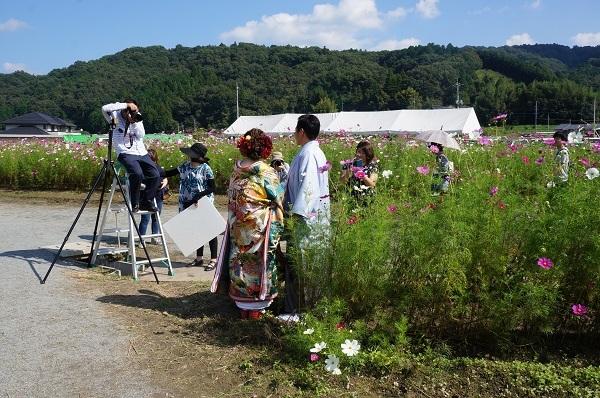 コスモス畑で、結婚式の前撮り?のカップル