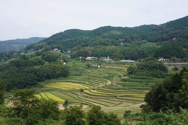 大垪和西棚田のすり鉢のほぼ頂点位置から撮影