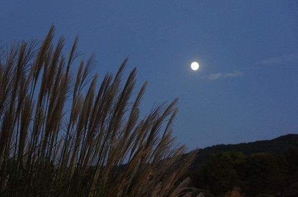 名月も、やや高く昇り、美しさが一段と冴えてます