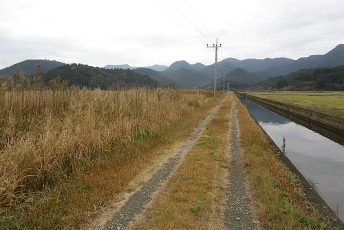 水路とヨシ原