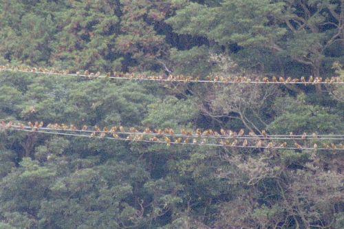 電線の群れ