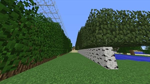 600.337、植林場作った
