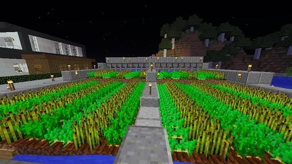 600.337、半自動収穫畑