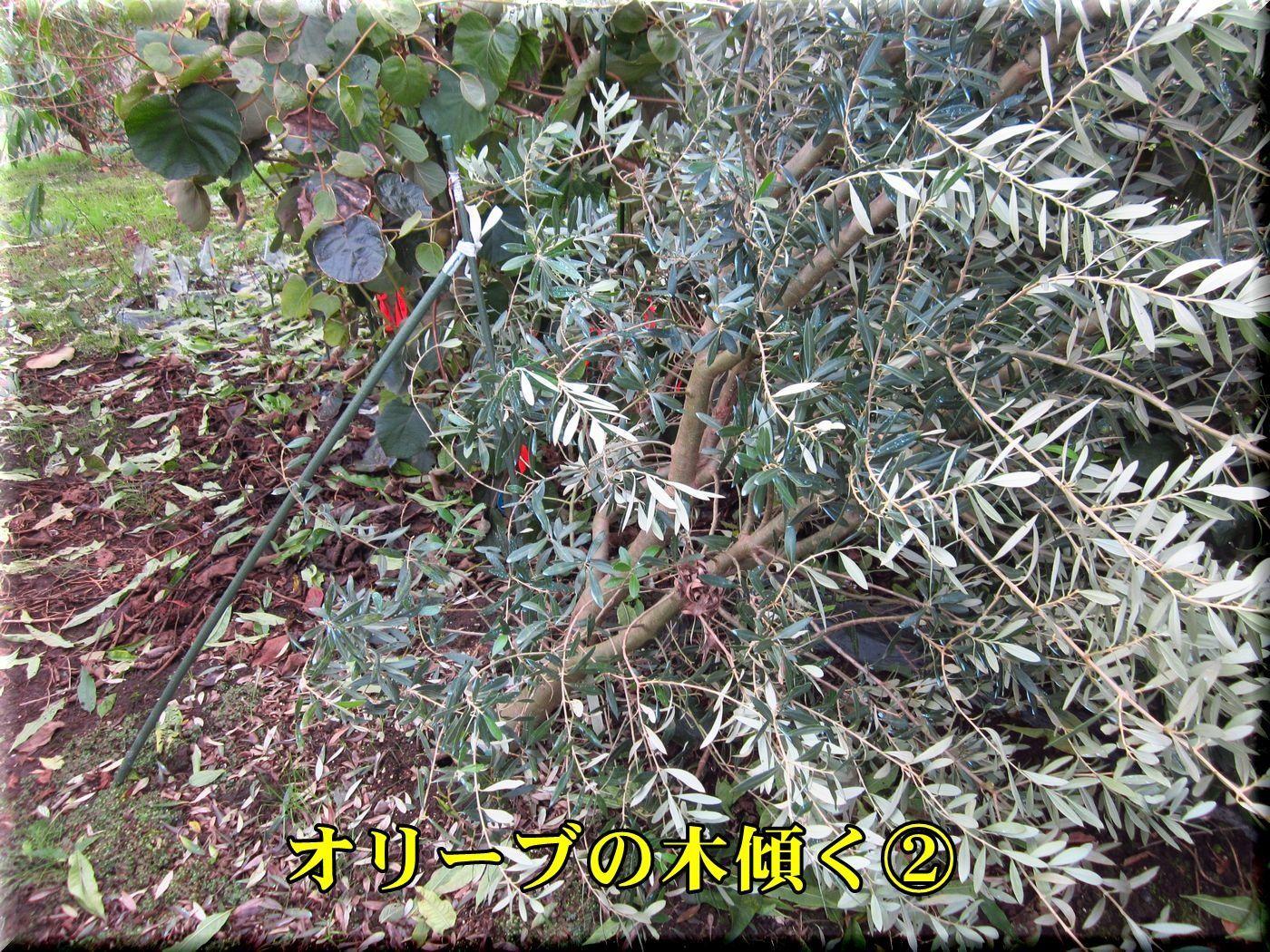1DC171023_004.jpg