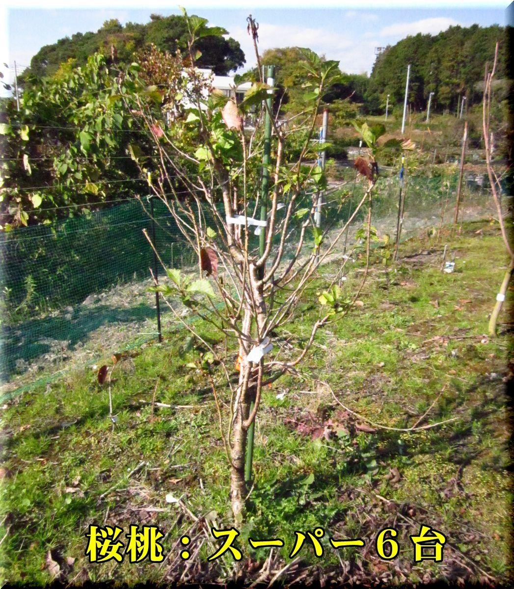 1S6_171129_006.jpg