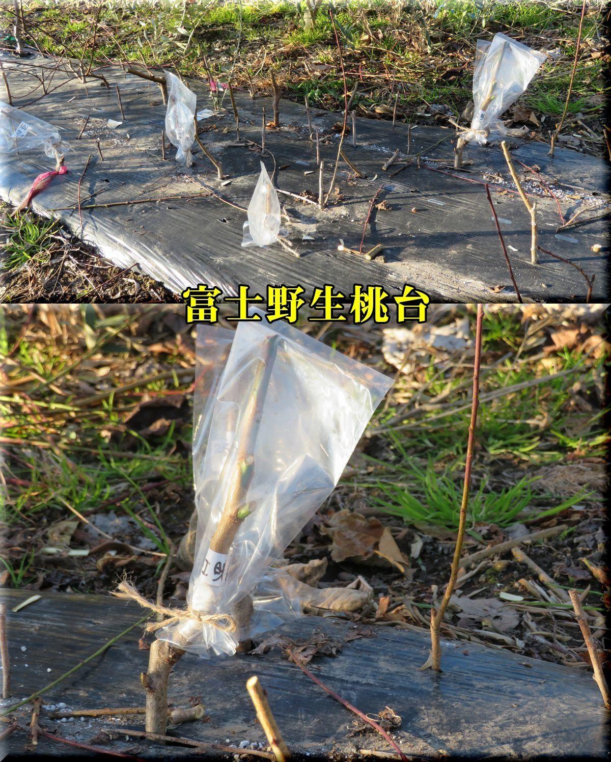 1fujiyasei180104_006.jpg