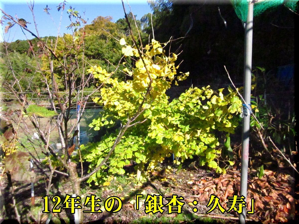 1ginan171201_011.jpg