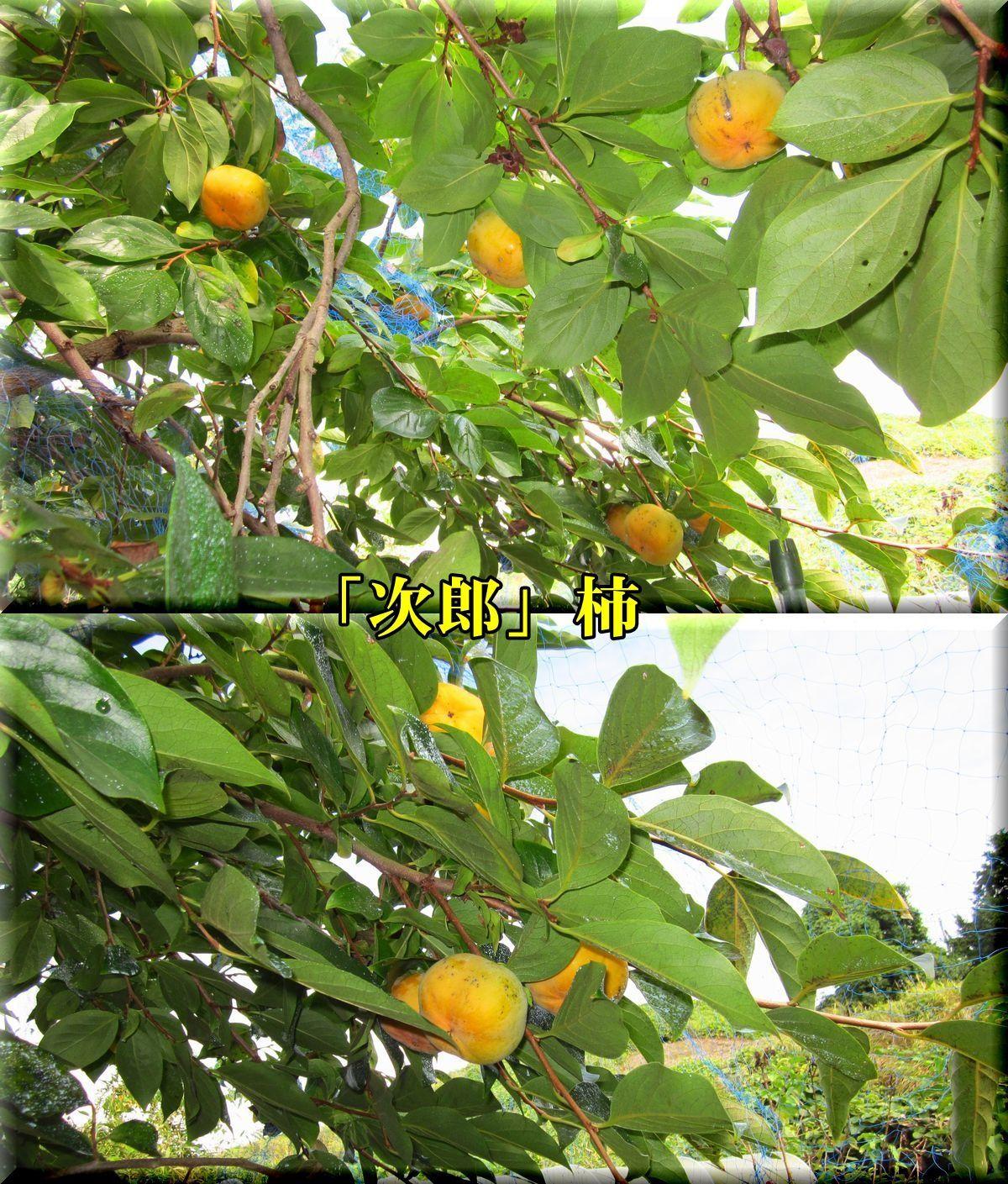 1jirou171020.jpg