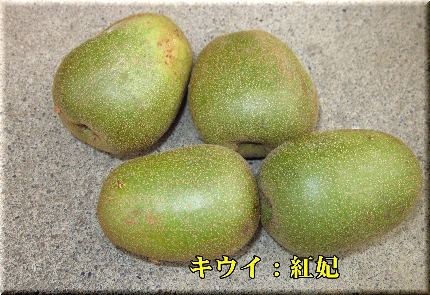 1kouhi171002_010.jpg