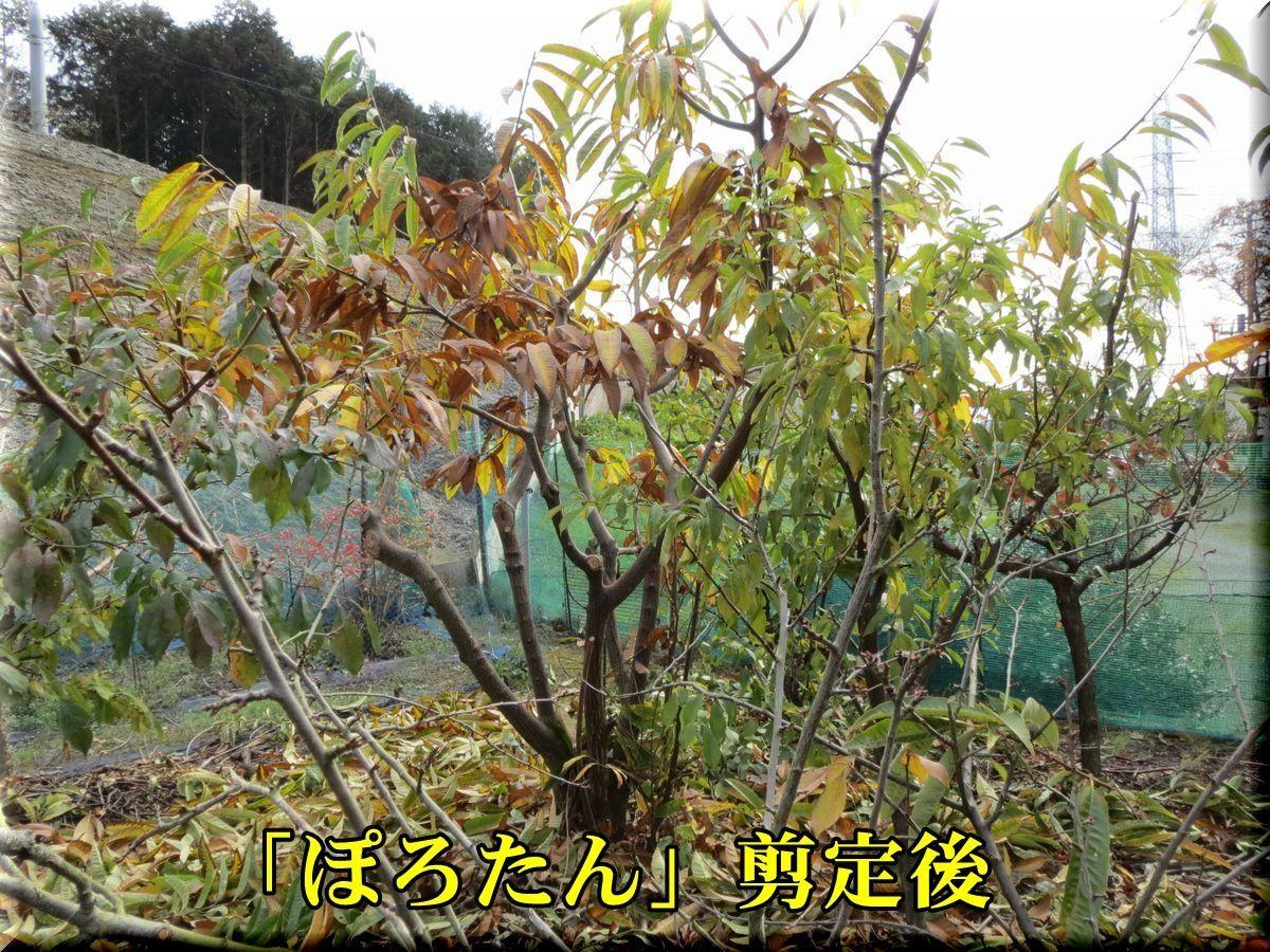 1porotan171202_004.jpg