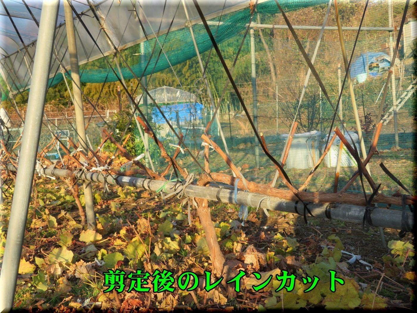 1raincut171219_010.jpg