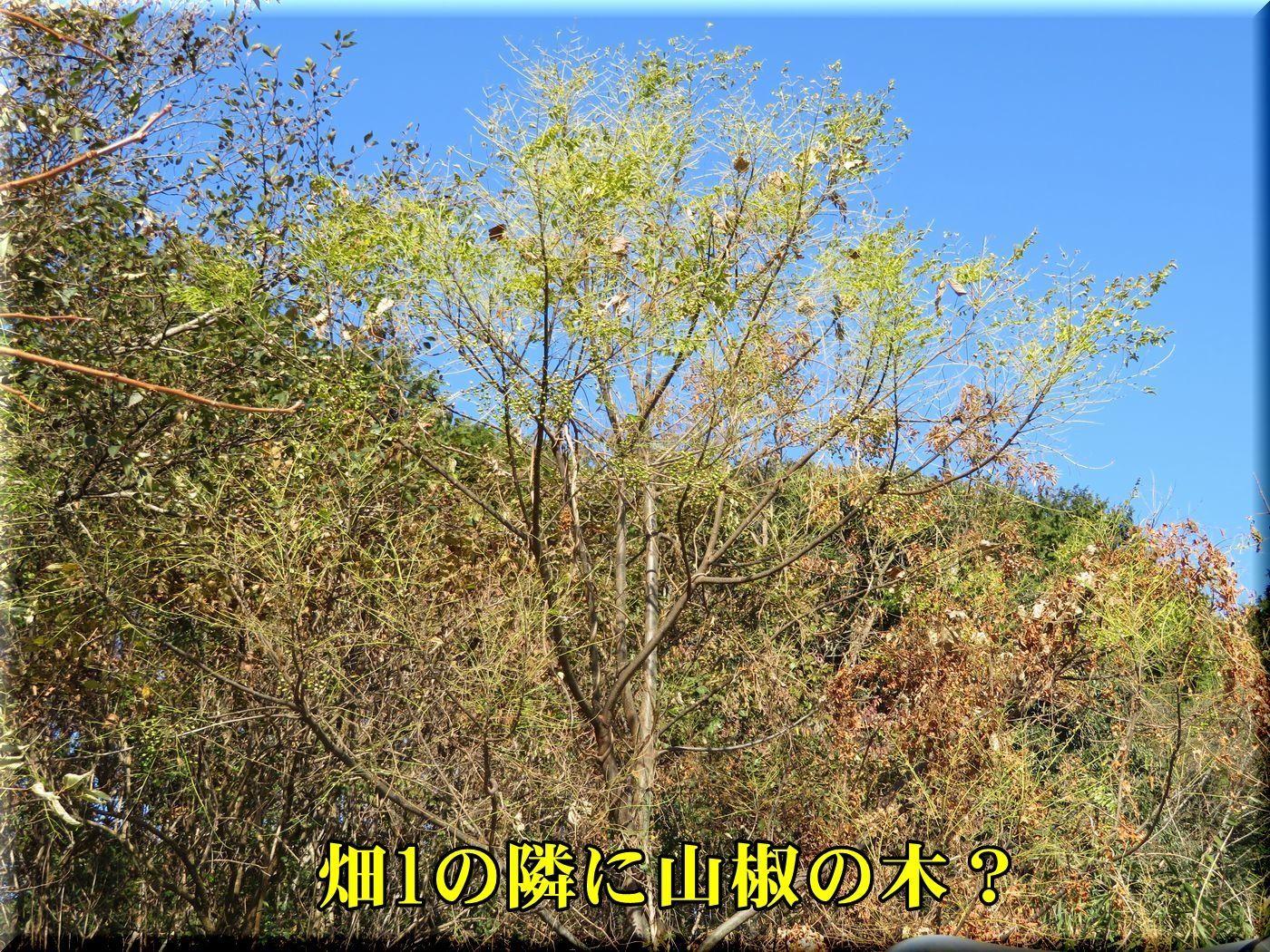 1sansyo171219.jpg